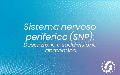 Sistema nervoso periferico (SNP): anatomia e suddivisione