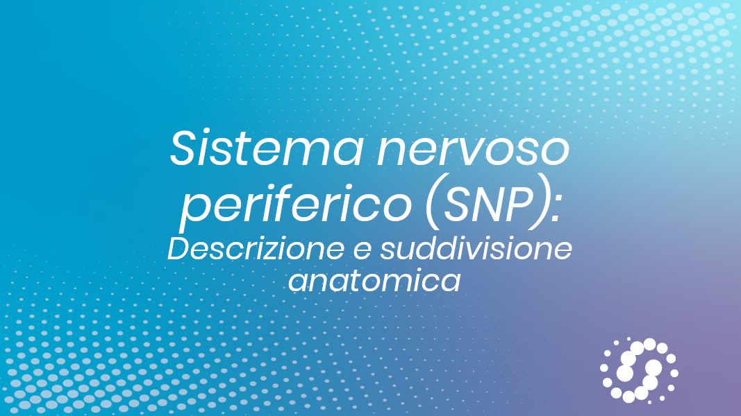 SNP suddivisione anatomica