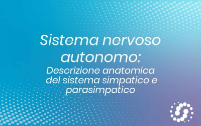 Sistema Nervoso Autonomo (SNA): suddivisione anatomica