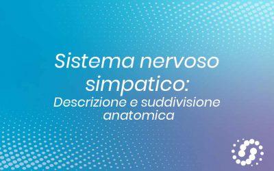Sistema nervoso simpatico (ortosimpatico): descrizione anatomica
