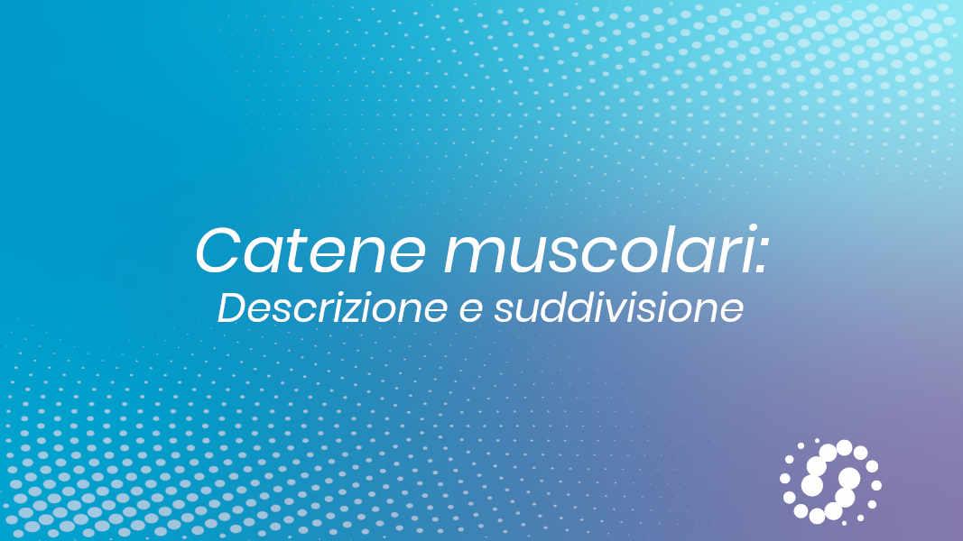 Suddivisione delle catene muscolari