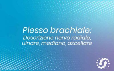 Plesso brachiale: descrizione nervo radiale, ulnare, mediano
