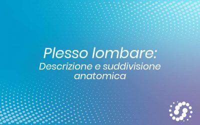 Plesso lombare: suddivisione e descrizione anatomica
