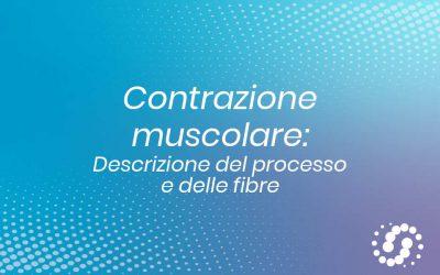 Contrazione muscolare: descrizione del processo e delle fibre