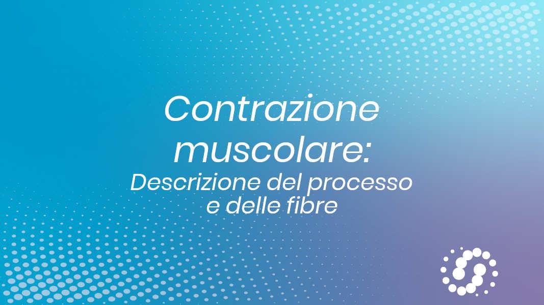 Come avviene la contrazione muscolare