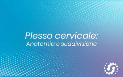 Plesso cervicale: composizione, suddivisione e decorso