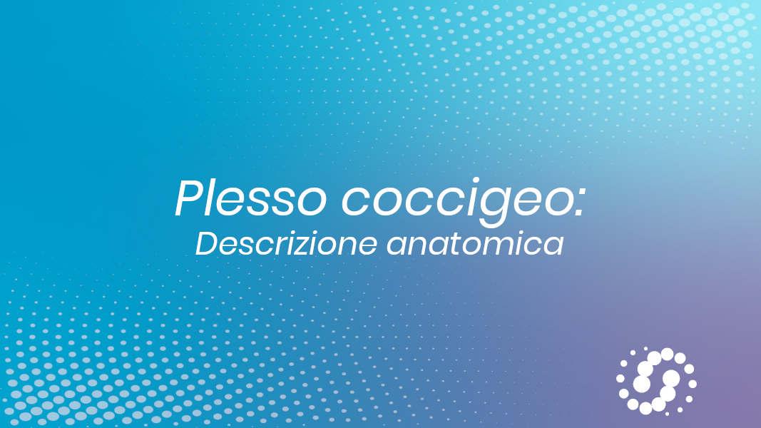 Plesso coccigeo: descrizione anatomica