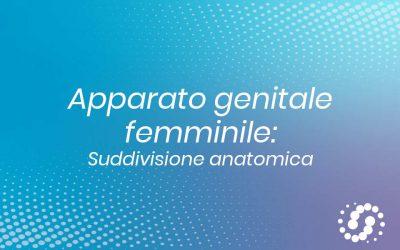Apparato genitale femminile: suddivisione anatomica