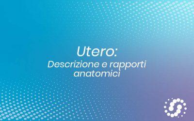Utero: descrizione e rapporti anatomici