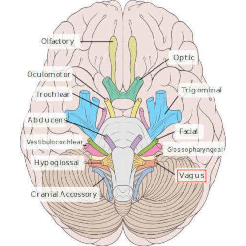 emergenza X nervo cranico