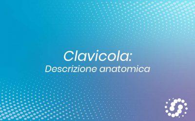 Clavicola: descrizione e rapporti anatomici