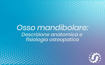 Osso mandibolare: descrizione, cenni e rapporti anatomici