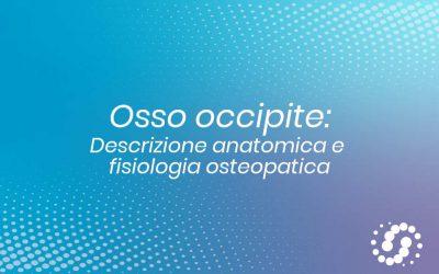 Osso Occipite: descrizione, cenni e rapporti anatomici