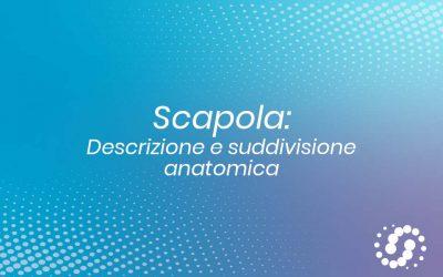 Scapola: descrizione e rapporti anatomici