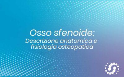 Osso Sfenoide: descrizione, cenni e rapporti anatomici