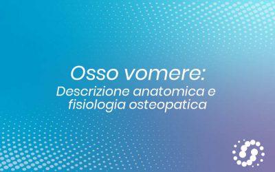 Osso Vomere: descrizione, cenni e rapporti anatomici
