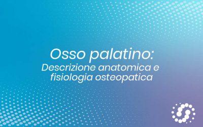 Osso Palatino: descrizione, cenni e rapporti anatomici