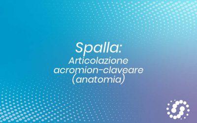 Acromion clavicolare o acromion claveare – Articolazione della Spalla