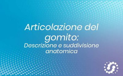 Articolazione del gomito: descrizione e composizione anatomica