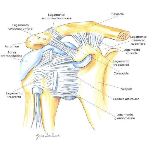 Capsula articolare della spalla