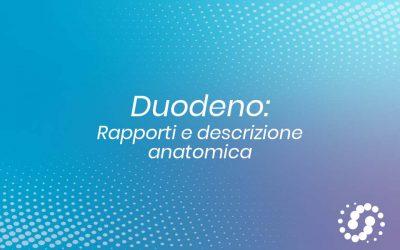Duodeno: rapporti e descrizione anatomica