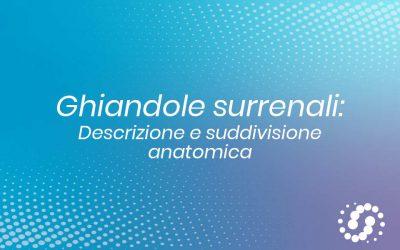 Ghiandole surrenali: descrizione e suddivisione anatomica