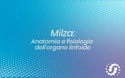 Milza: anatomia e fisiologia dell'organo linfoide