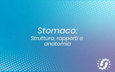 Stomaco: struttura, rapporti e descrizione anatomica