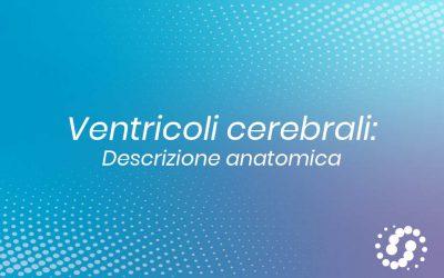 Ventricoli cerebrali: descrizione e fisiologia osteopatica