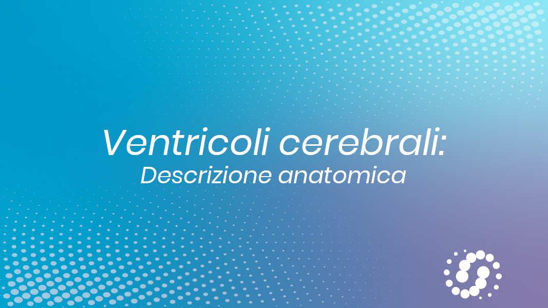 Ventricoli cerebrali anatomia