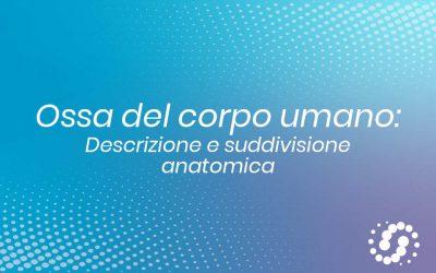 Ossa del corpo umano: anatomia, tipologia e suddivisione