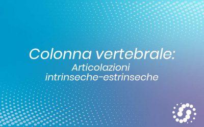 Articolazioni della colonna vertebrale: suddivisione e anatomia
