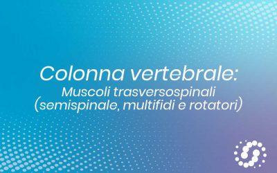 Muscoli Trasversospinali: dove si trovano e rapporti
