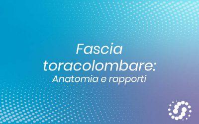 Fascia toracolombare: dove si trova, anatomia e rapporti