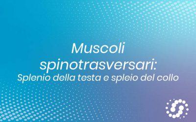 Muscoli spinotrasversari: funzione, decorso e inserzione anatomica