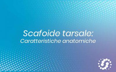 Osso scafoide (navicolare) tarsale: descrizione e rapporti anatomici