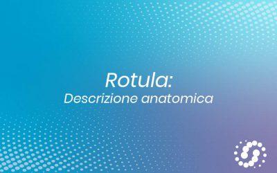 Rotula o patella (osso sesamoide): descrizione e rapporti anatomici