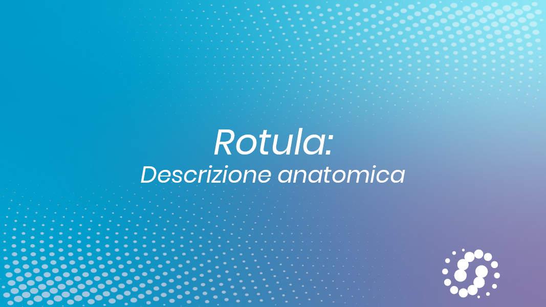 Rotula anatomia