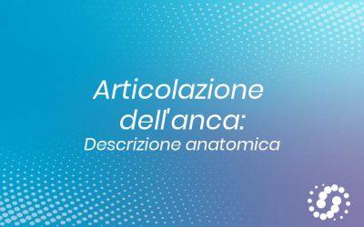 Articolazione dell'anca (Coxofemorale): descrizione anatomica