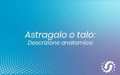 Astragalo o Talo: descrizione e rapporti anatomici