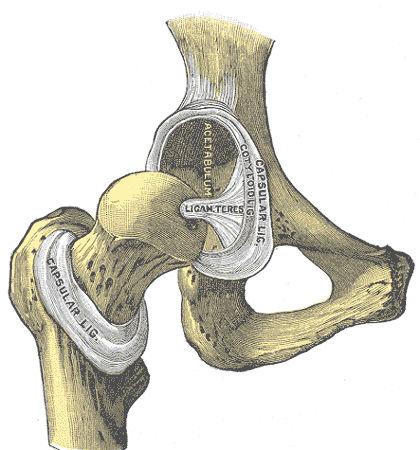 Legamento della testa femorale