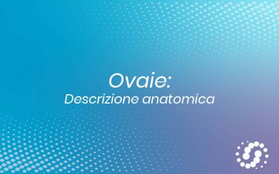 Ovaie: dove si trovano, caratteristiche e rapporti anatomici