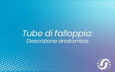 Tube di falloppio: topografia e descrizione anatomica