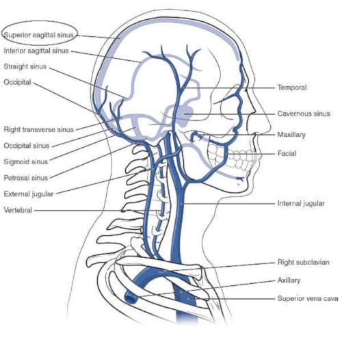 Seno longitudinale superiore origine, decorso e trattamento osteopatico