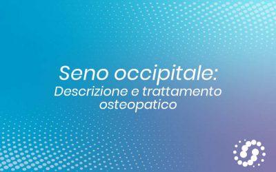 Seno occipitale, dove si trova, decorso, rapporti e trattamento osteopatico