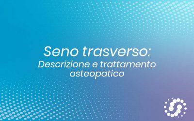 Seno trasverso, dove si trova, decorso, rapporti e trattamento osteopatico