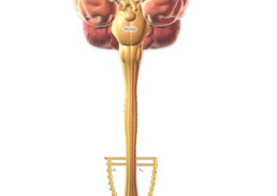 Relazioni vertebre lombari