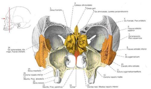 Etmoide posizione
