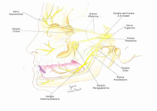 Ganglio otico