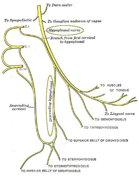 Nervo ipoglosso